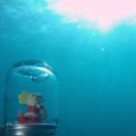 クリスマスは海底でサンタさんと…(^O^☆♪