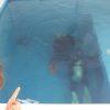 連日プールで楽しくダイビング