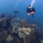 本日の海底:サンゴの海を潜ってみるの巻ヽ(^o^)丿ヽ(^o^)丿